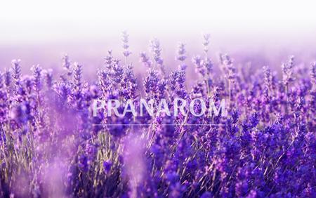 Lavender-blog 2